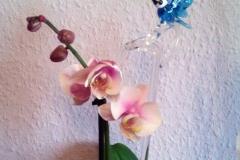 orchideenstab-2